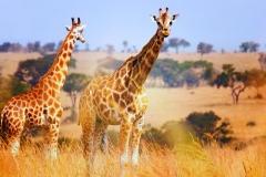 AfricaFeeling_Beelen_klantervaring-1