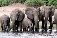 Chobe-National-Park