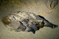 Hyena-Khwai