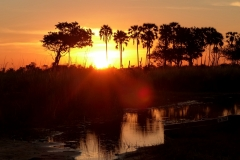 Sunset-Okavango-Delta