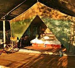 Pom Pom Camp